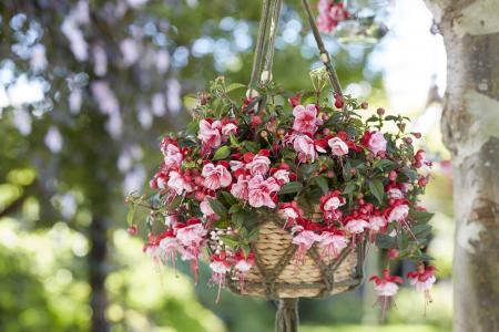 Kodin Kukat